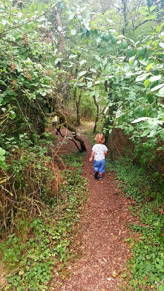 mini treewalk
