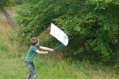catching bugs