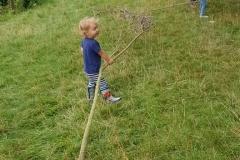 small twig