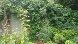Secret garden Oxfordshire