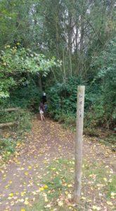woodland walk Bicester