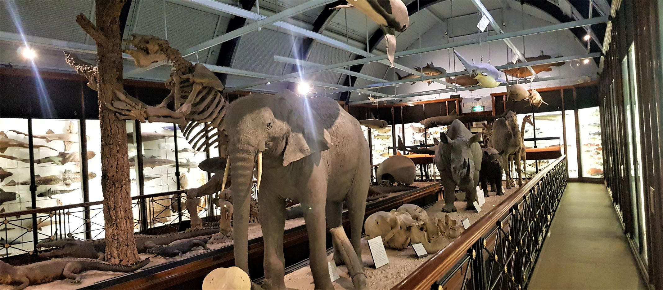 Natural History museum Tring