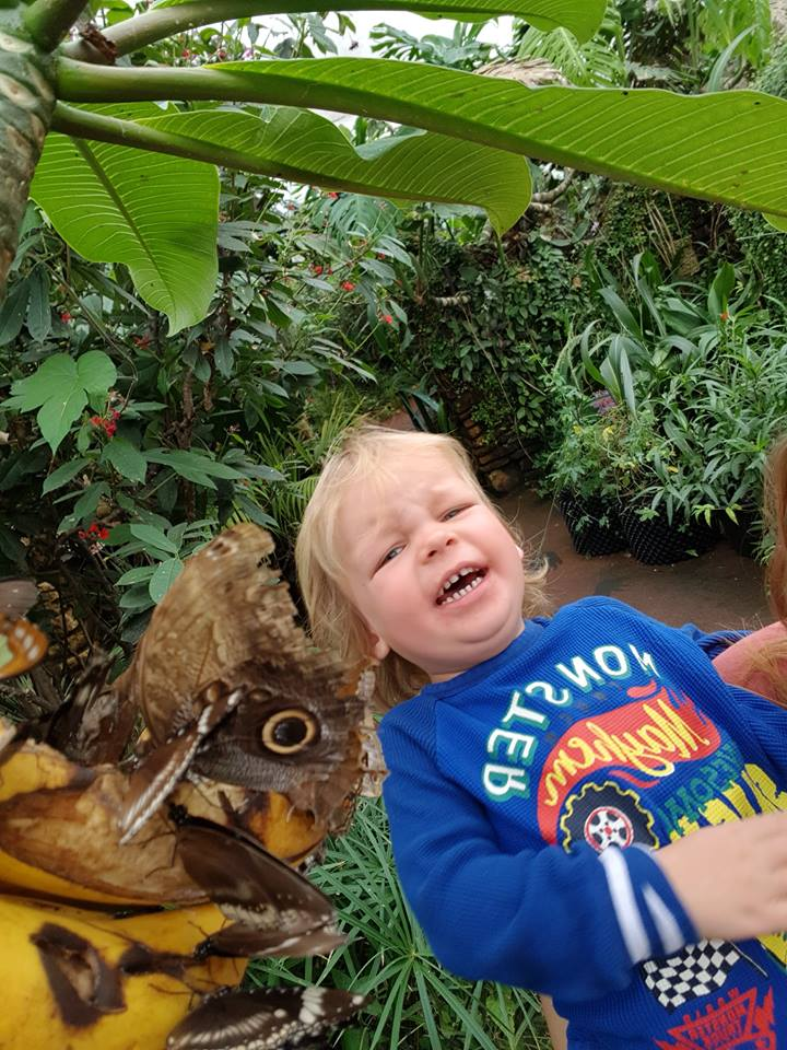 Stratford butterfly Farm Annual pass