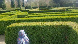 Knebworth house maze