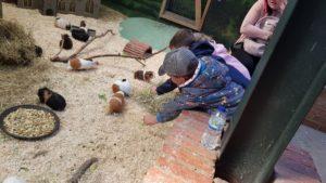 Hatton Guinea pig village