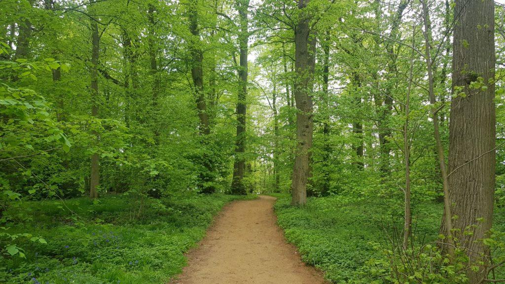 oxfordshire woodlands