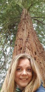 Harcourt Arboretum giant redwoods