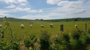Blewbury fields