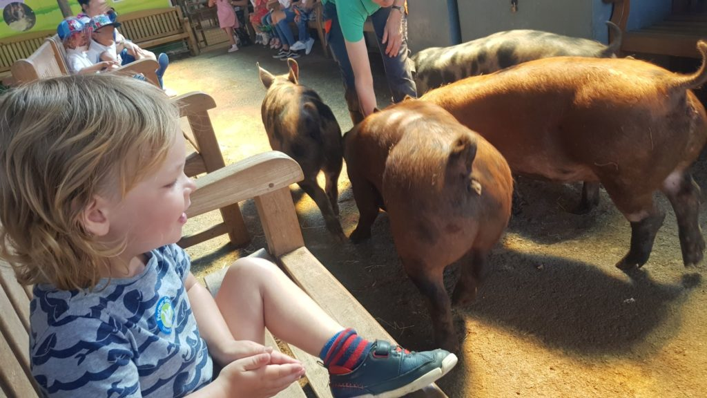 Meeting the pigs at Farmer Gow's