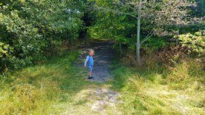 Woodland wals Aston clinton park