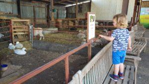 farmer Gows