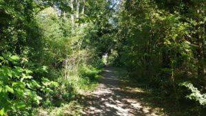 Stanton Harcourt woodlands