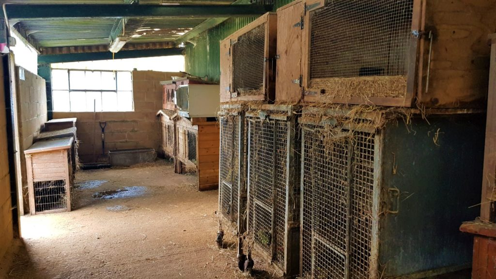 Rabbit breeding room
