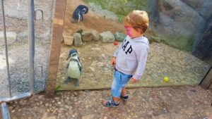 penguins at wmsp