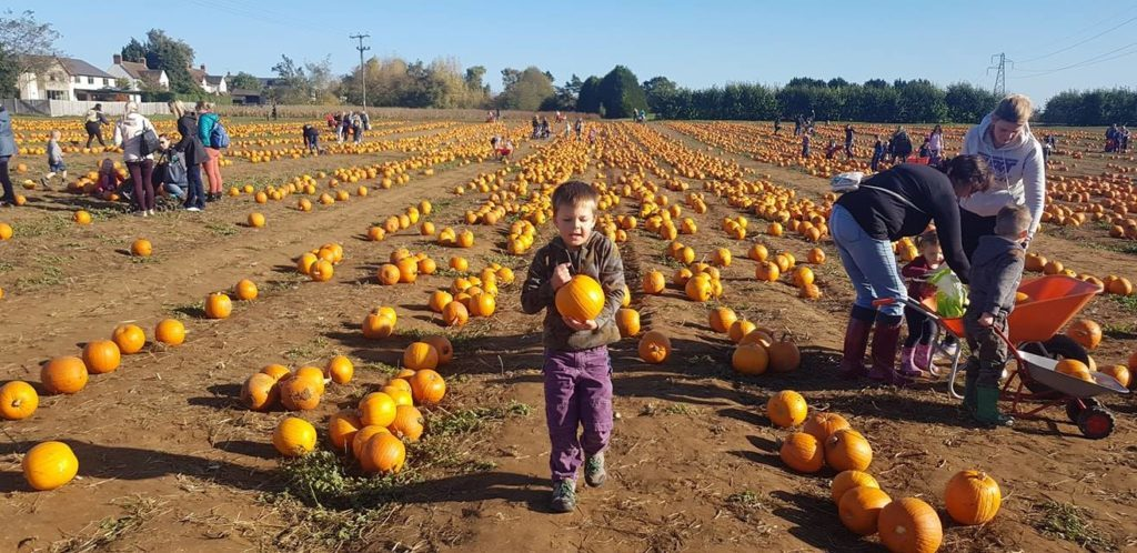 PYO pumpkins Oxfordshire