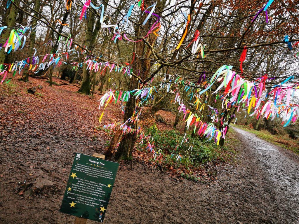 wishing tree Ashridge estate