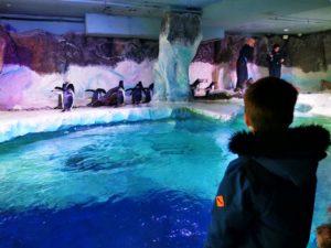 Penguins In Birmingham
