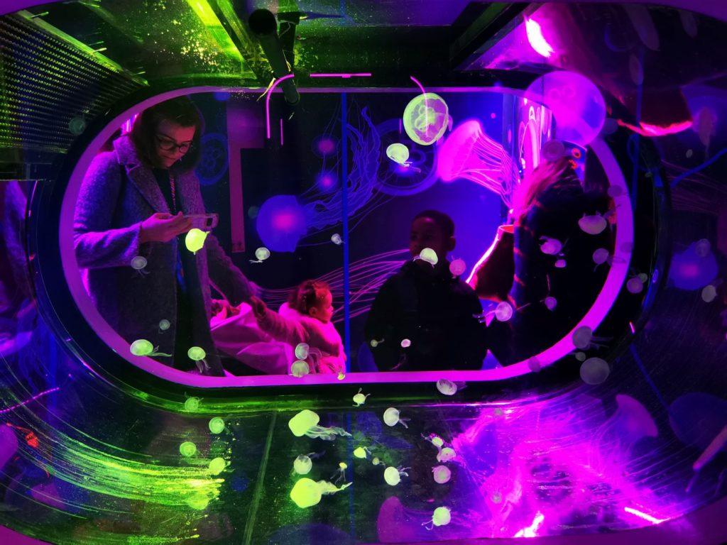 Jellyfish tank sea life centre