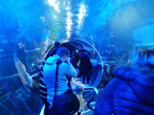 Sea life centre tunnel