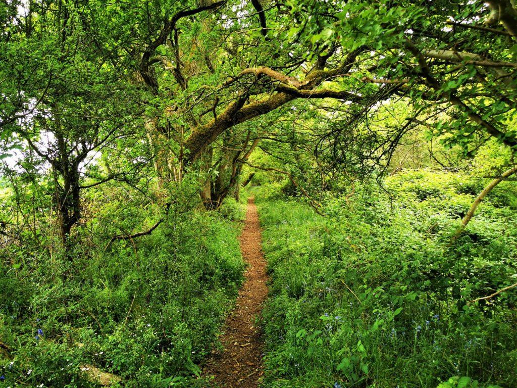 Tackley woods
