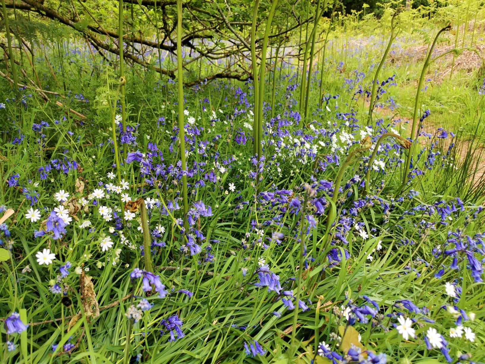 Tackley Wood