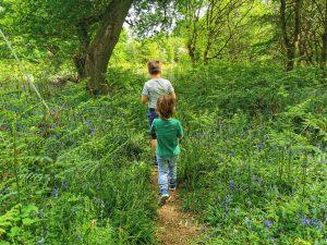 Tackley wood walk