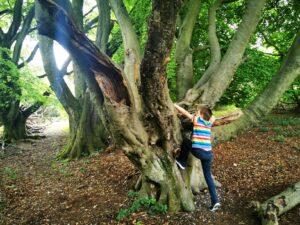 Tree climbing nature reserves