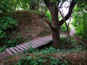 Walkways through ardley quarry nature reserve