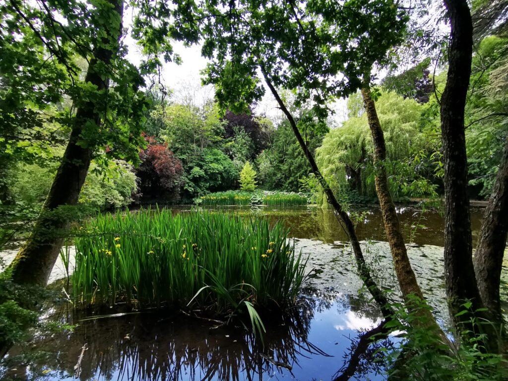 Wild Wychwood Garden