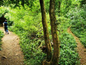 Ardley Wood