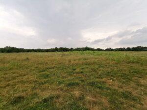 Ardley quarry field