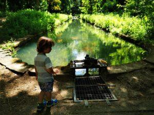 Chipping norton gardens