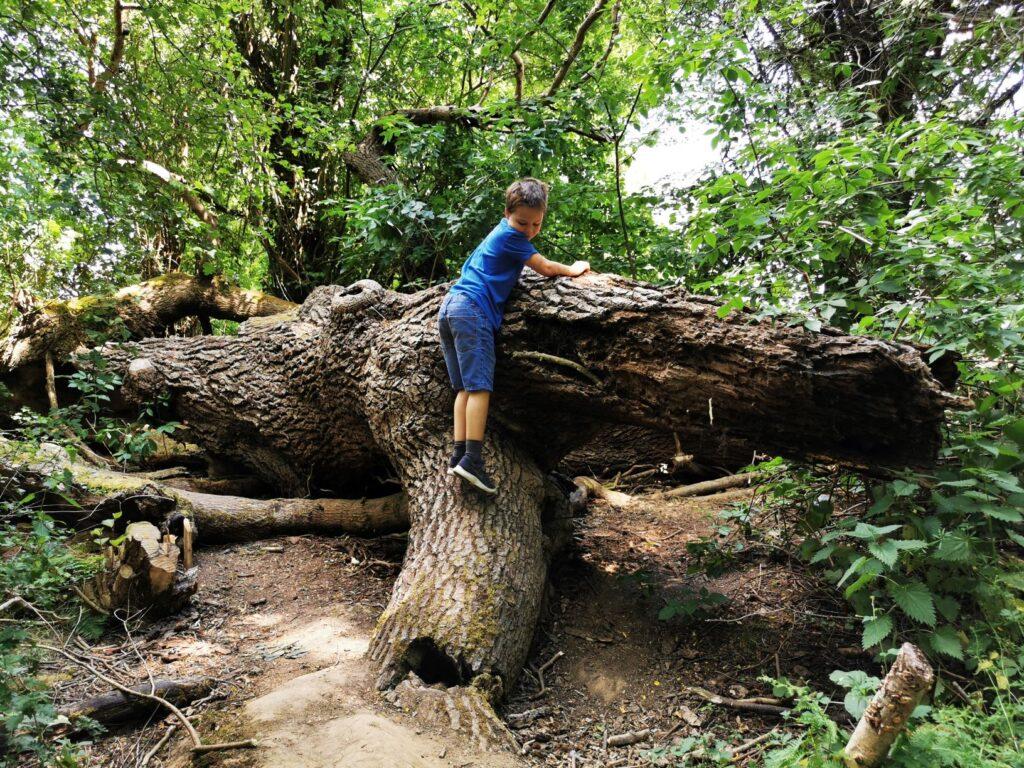 Tree climing wild wychwood garden