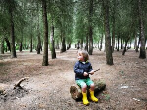 Pine forest dry sandford