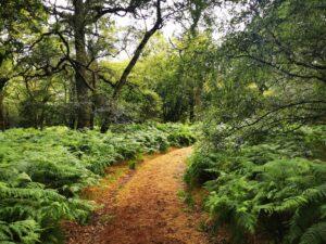 Umberslade woods