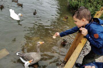 Brackley lake