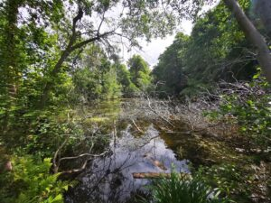 Oxford Nature reserves