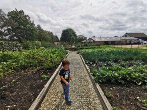 Vegetable patch Stratford