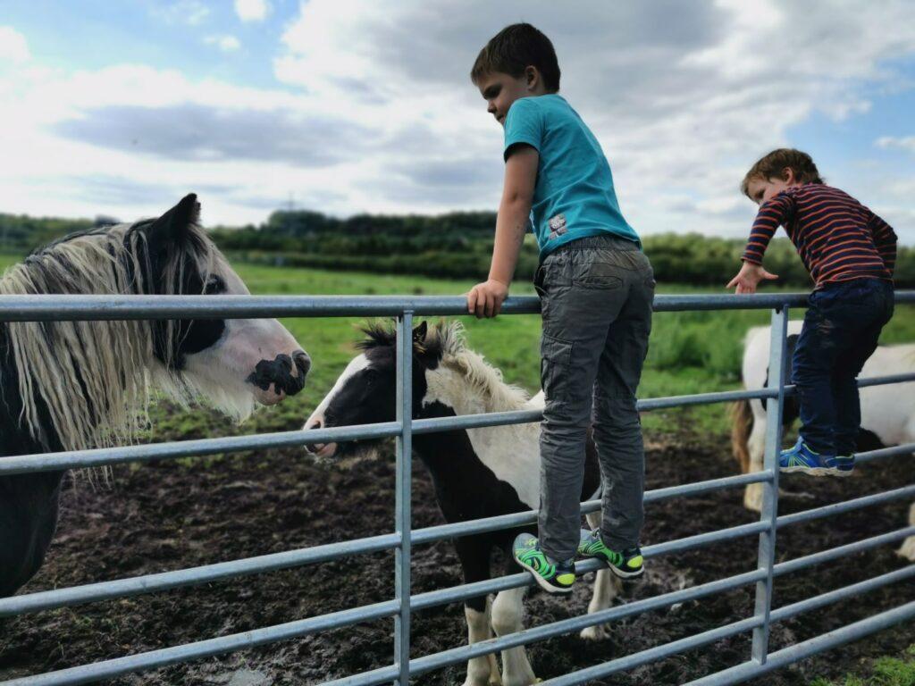 Tiddenfoot ponies