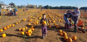 Pumpkin patches in Oxfordshire
