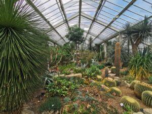 Cacti green house kew