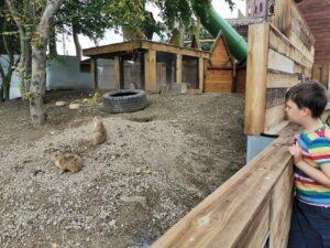 Animals at Hobbledown