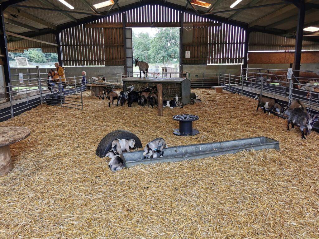 Goats In Milton Keynes