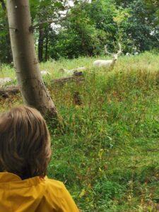 white stag Lincolnshire