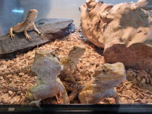 Reptile shop Towcester