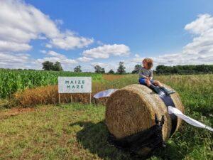 Maize maze buckinghamshire