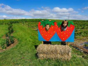 Strawberry picking in  bucks
