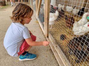 Poultry centre Towcester